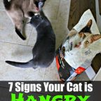 hangry cats