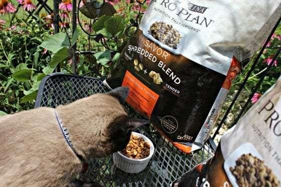 savor cat food