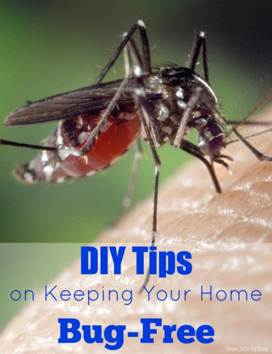 DIY Tips on Keeping Your Home Bug-Free