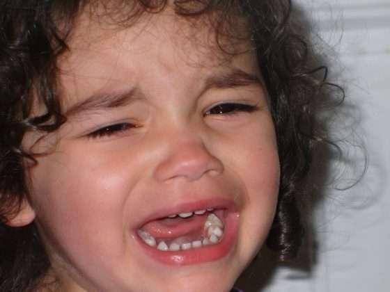 crying pet damages