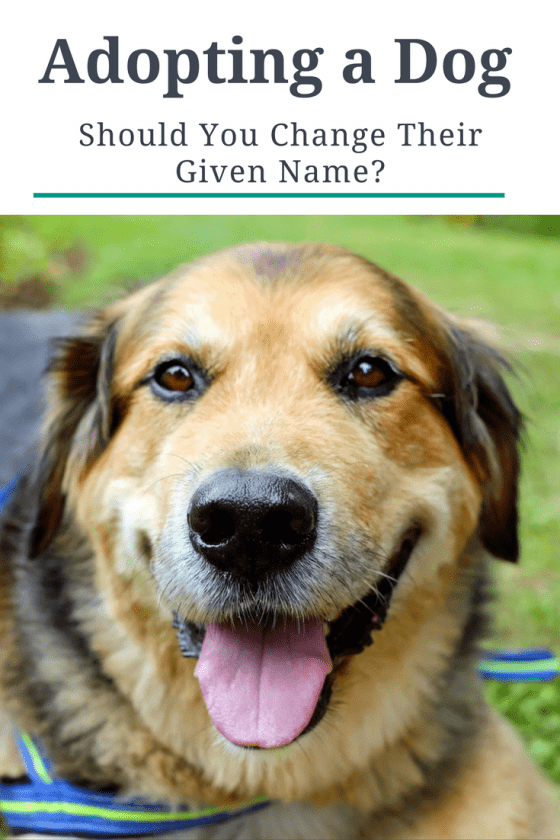 adopting a dog, adopting a dog tips, adopting a dog or puppy, changing a dog's name