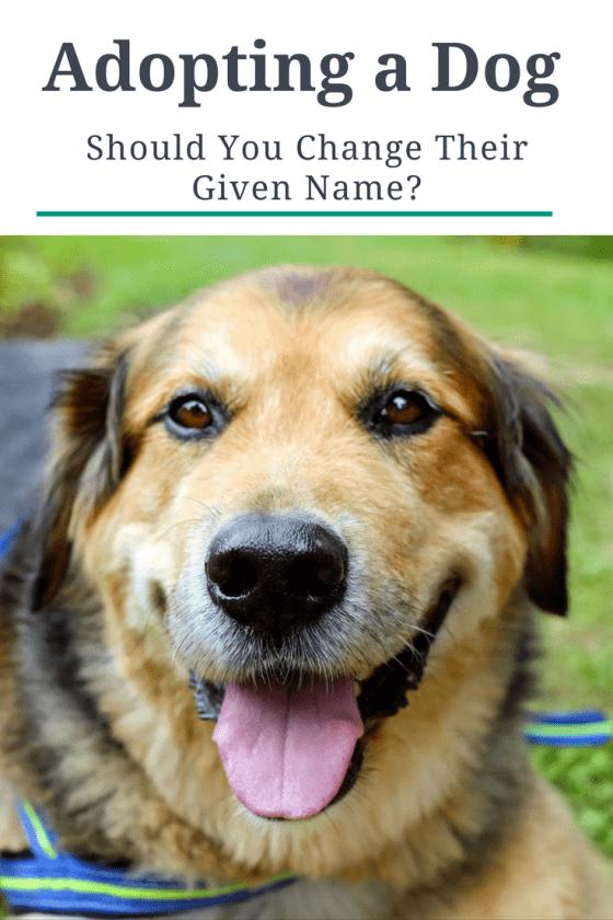 adopting a dog should you change their given name. Black Bedroom Furniture Sets. Home Design Ideas