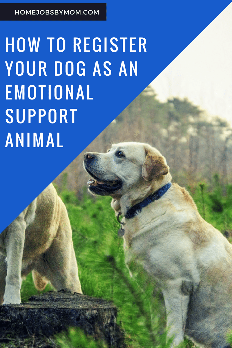 How To Register Your Dog As An Emotional Support Animal