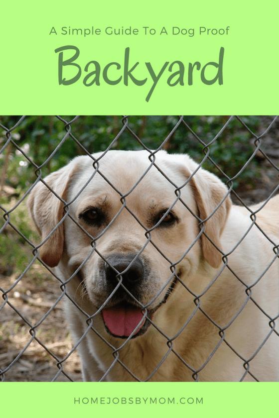 dog proof backyard, dog proof backyard ideas, dog proof backyard fence, dog proof backyard chicken wire, dog proof backyard plants, dog proof backyard tips, dog proof backyard simple