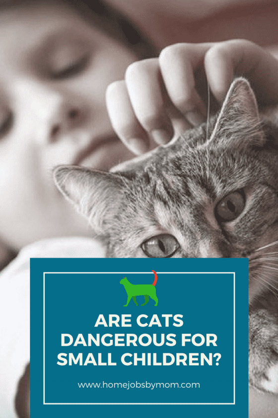 Are Cats Dangerous for Small Children?