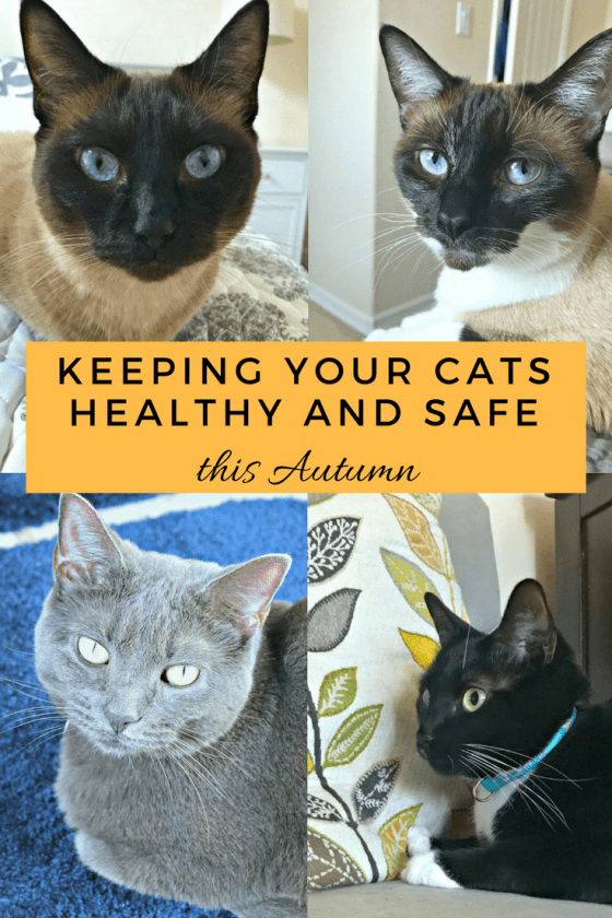 fall with cats, cats safe this fall, fall safety tips for cats
