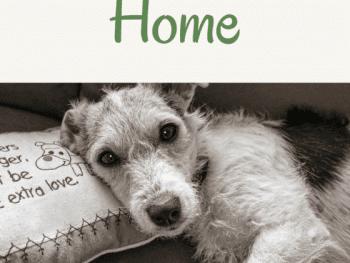 pet friendly, pet friendly home, pet friendly life hacks, pet friendly home ideas, pet friendly home diy, pet friendly home tips