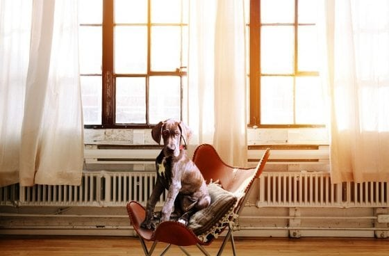 windows, window replacements, replacing windows, home renovations
