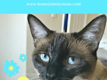 tidy cats, cat litter, litter box tips, litter box tricks