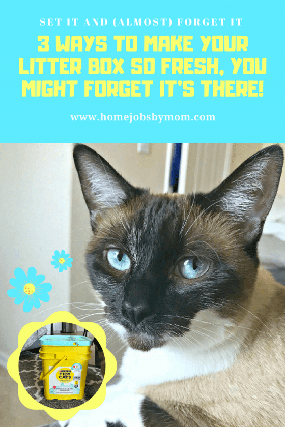 tidy cats, cat litter, litter box tips, litter box tricks