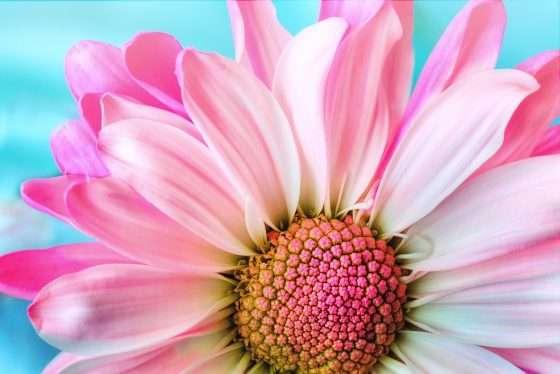 floral business, flower shop, florist, floral designer, florist business, flower growing shop