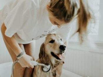 Keep Your Pets Healthy With These Tips