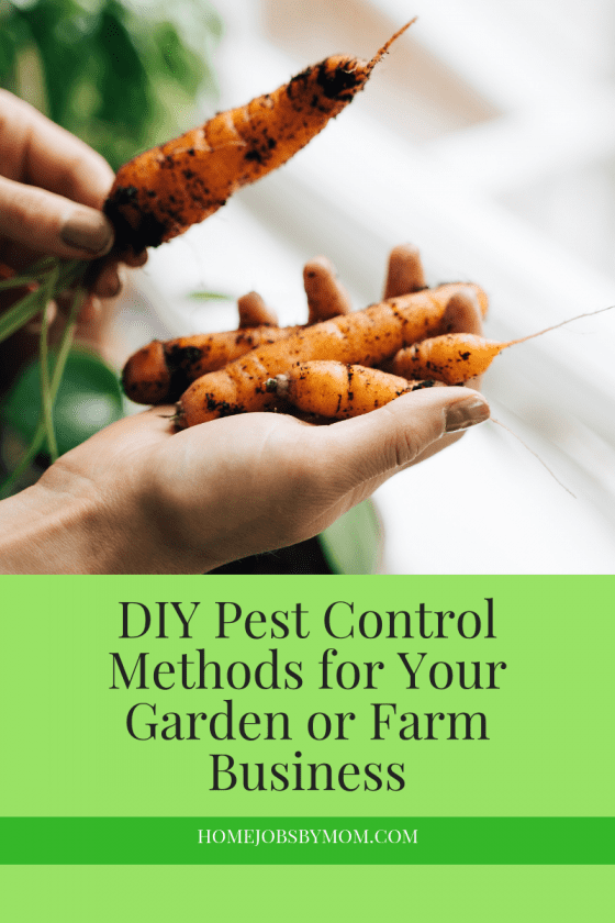 DIY Pest Control Methods