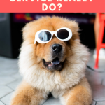What Does a Dog Grooming Service Really Do_