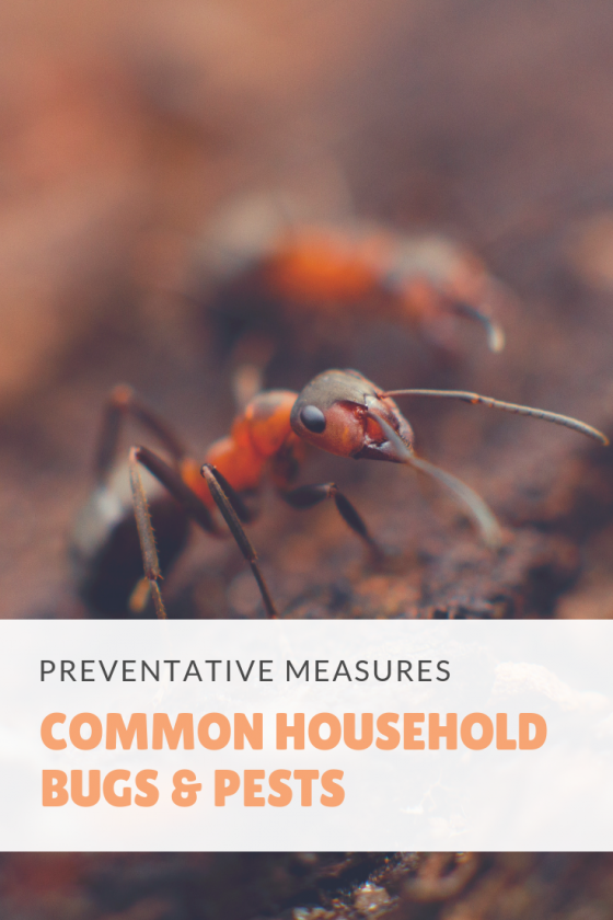 preventing common household bugs