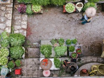 DIY Pest Control Methods for Your Garden or Farm Business
