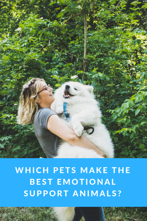 Which Pets Make the Best Emotional Support Animals_