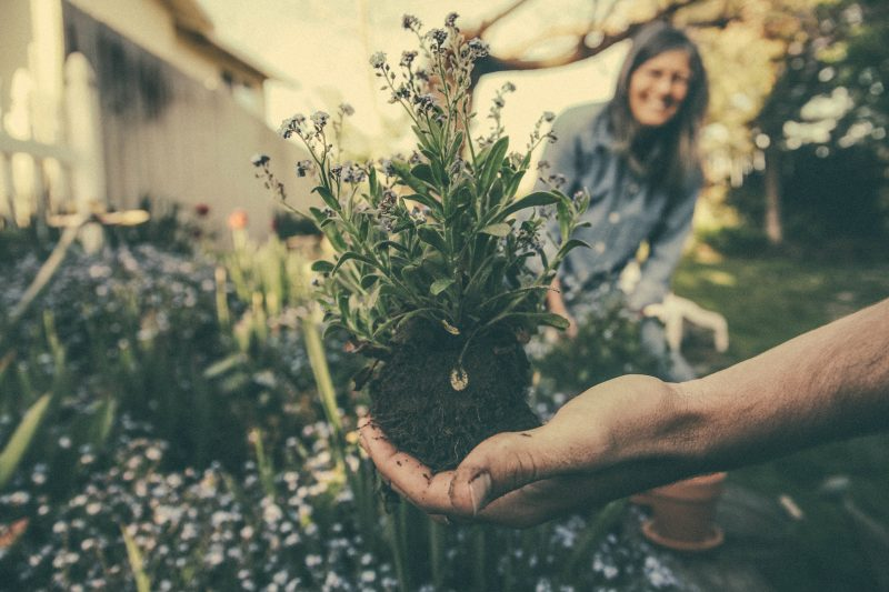 The Hidden Mental Benefits of Plant Therapy