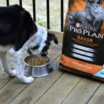 Supporting Your Dog's Digestive System Couldn't Be Easier