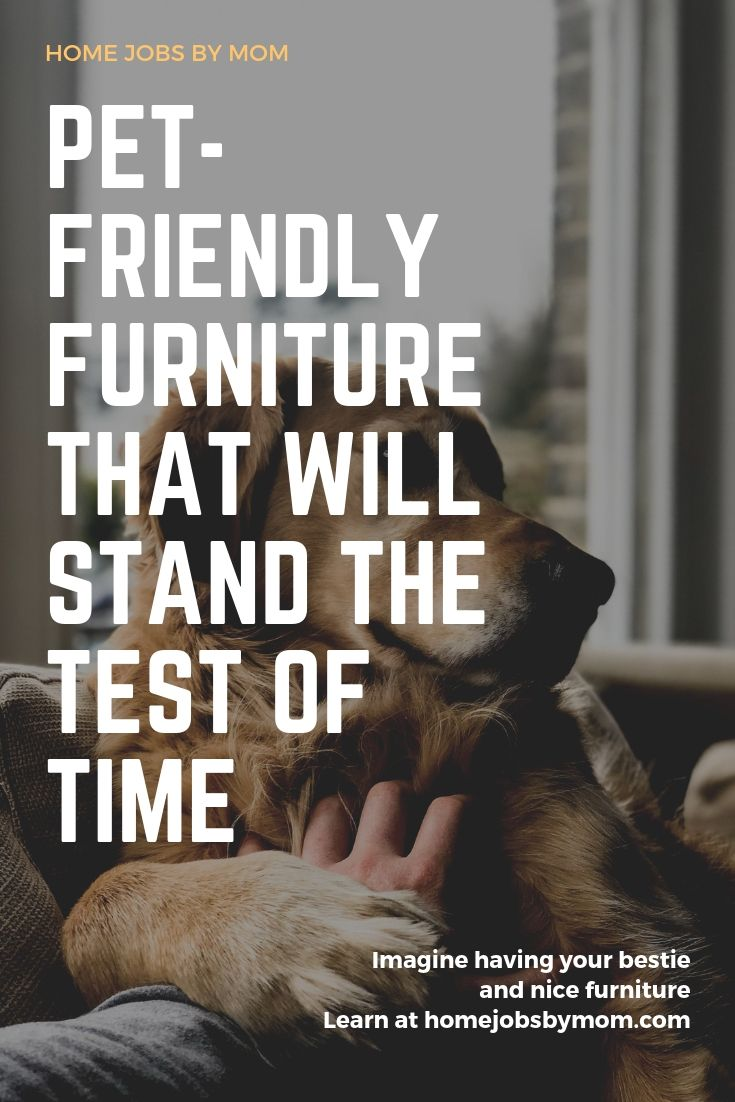 Pet-Friendly Furniture That Will Stand the Test of Time