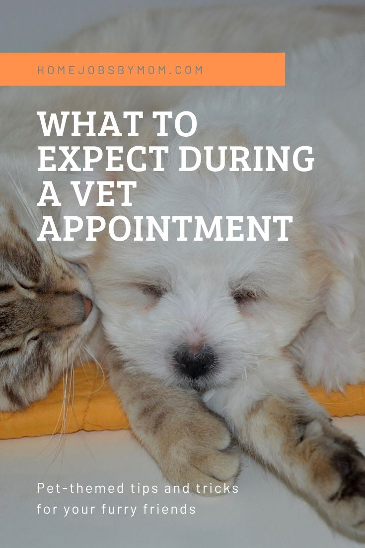 What to Expect During a Vet Appointment