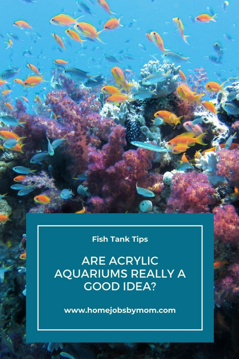 Are Acrylic Aquariums Really a Good Idea_