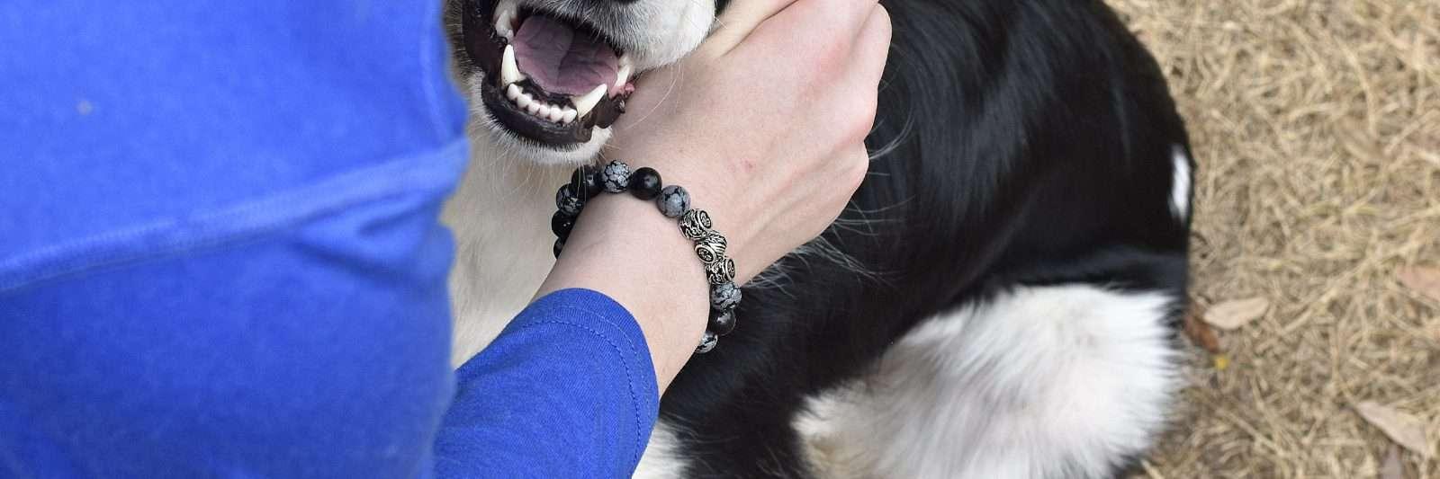 smiling dog with Azuro Republic bracelet