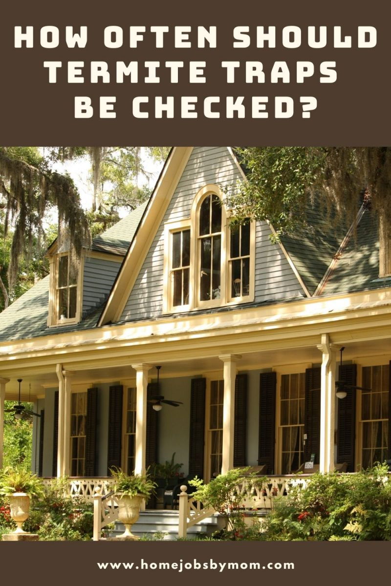 How Often Should Termite Traps Be Checked_