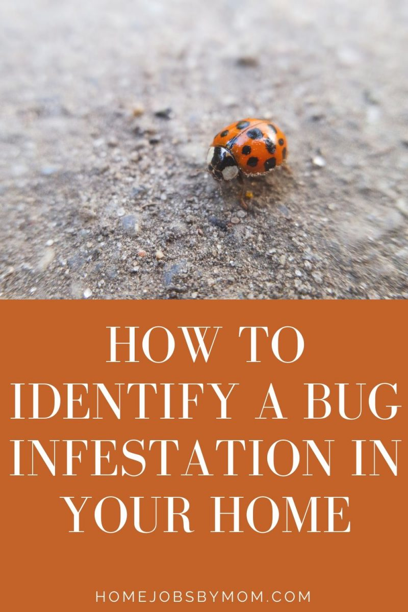 How to Identify a Bug Infestation in Your Home