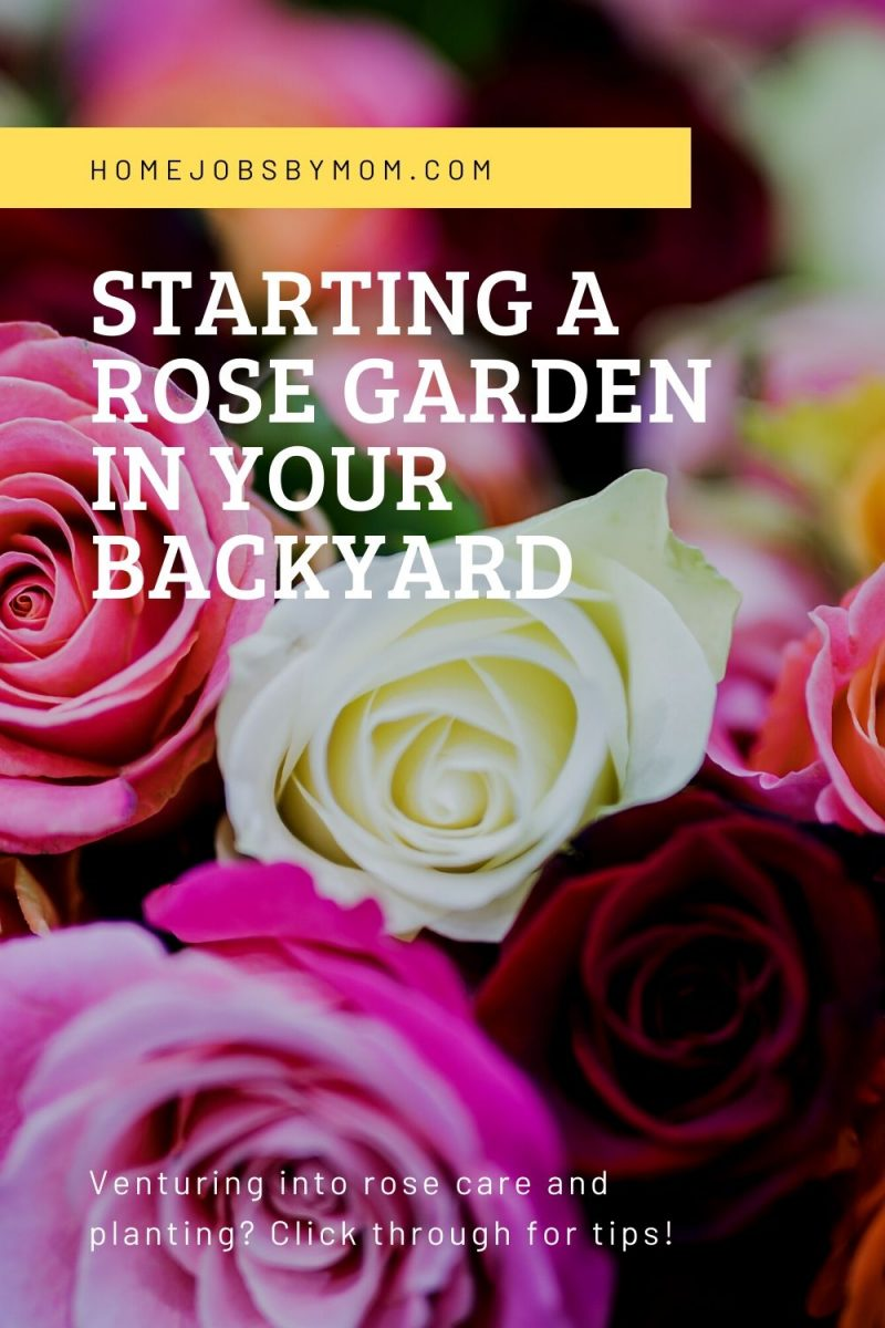 Starting a Rose Garden in your Backyard