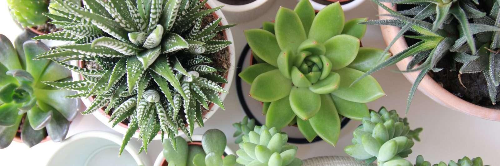 Low-Maintenance Houseplants for Beginners