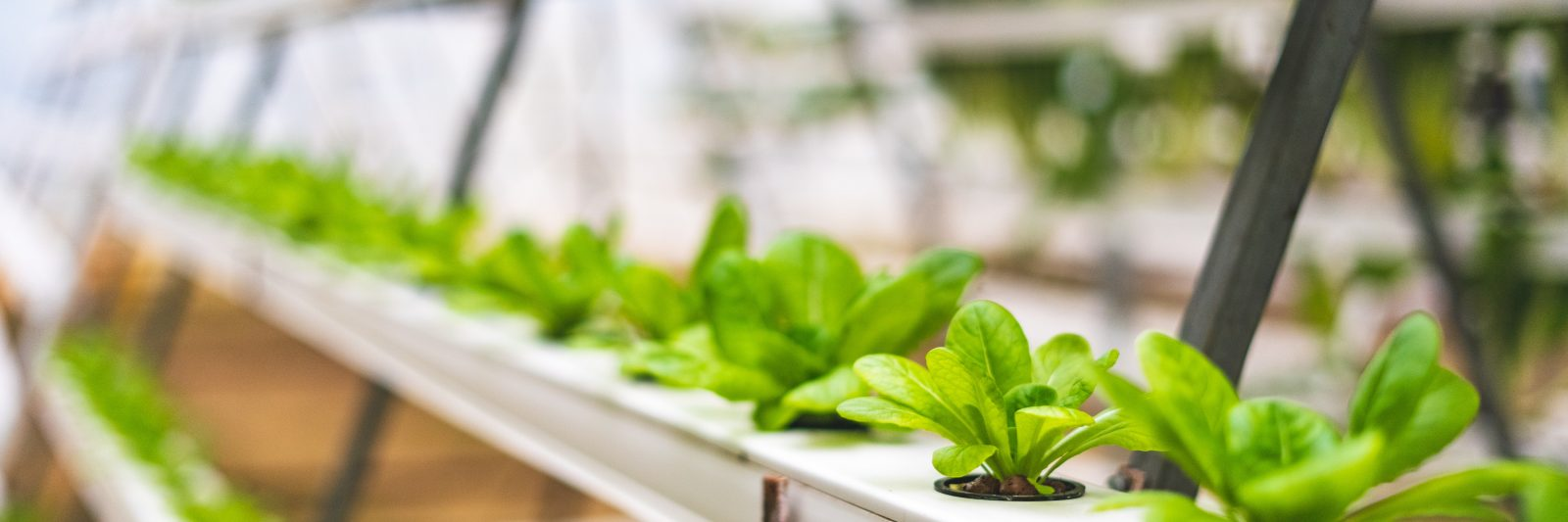 Why Investing in the Best LED Grow Lights is a Smart Move for Your Indoor Garden
