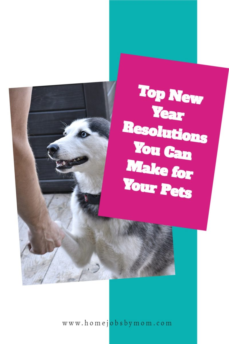 Top-New-Year-Resolutions-You-Can-Make-for-Your-Pets
