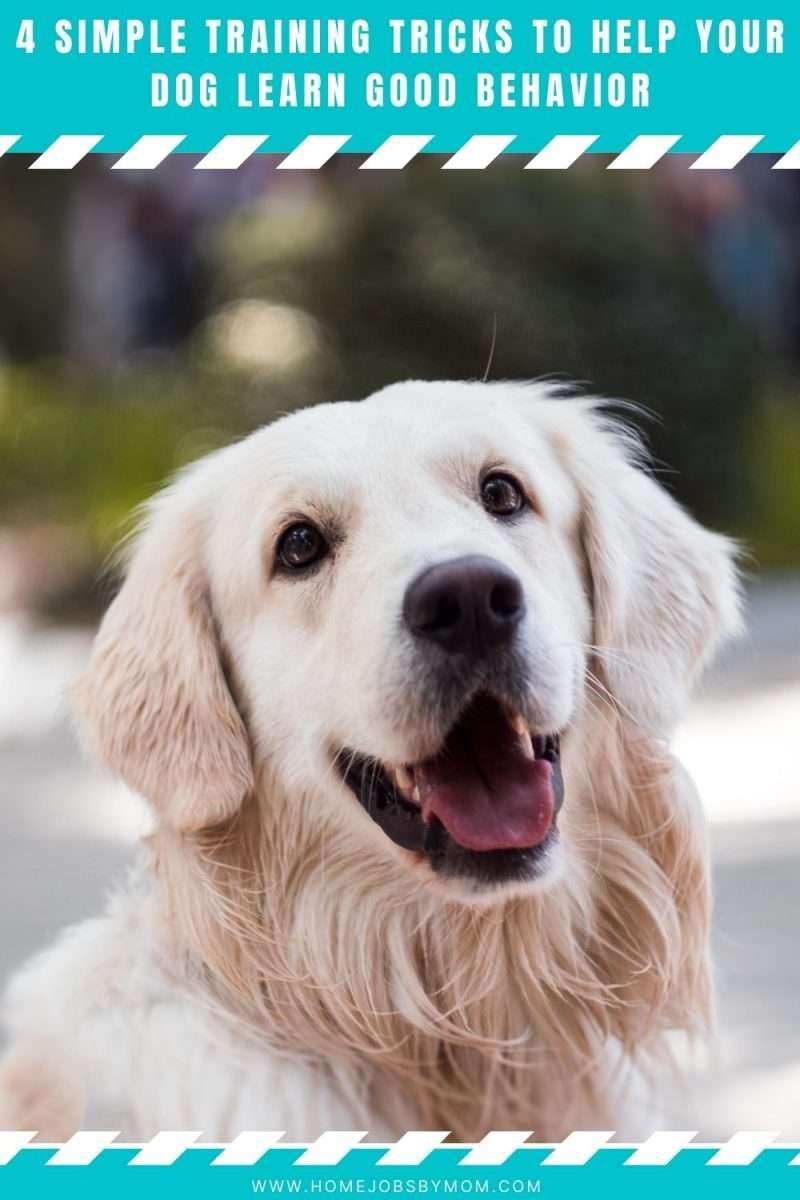 4 Simple Training Tricks To Help Your Dog Learn Good Behavior