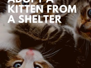 8 Reasons to Adopt a Kitten From a Shelter