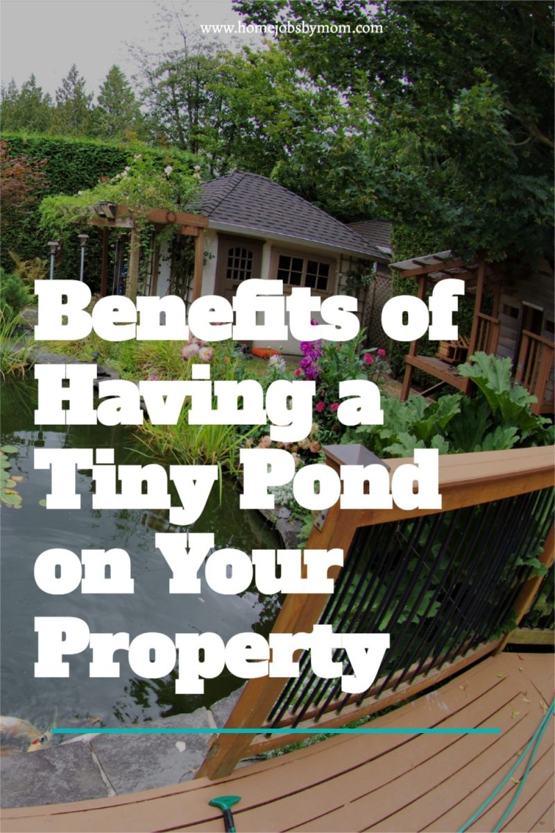 Benefits-of-Having-a-Tiny-Pond-on-Your-Property