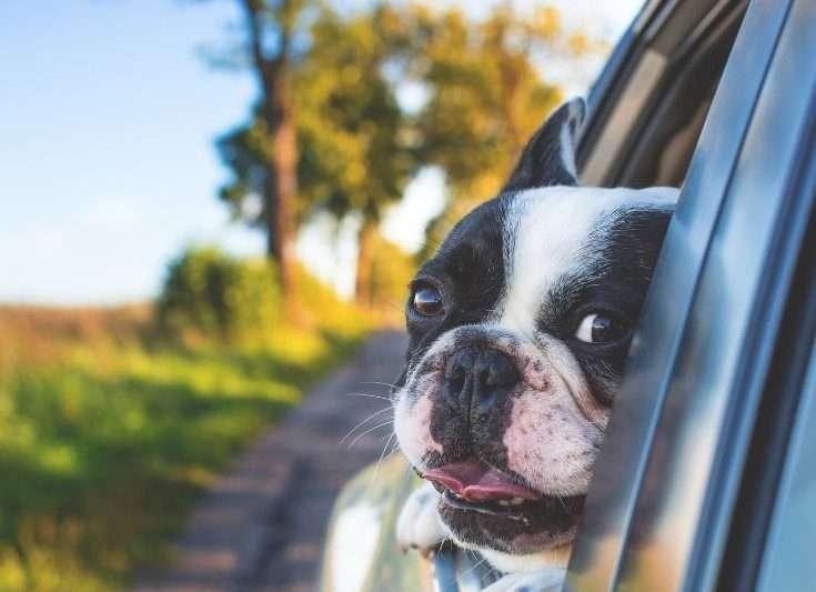 Pet Travel Post COVID-19
