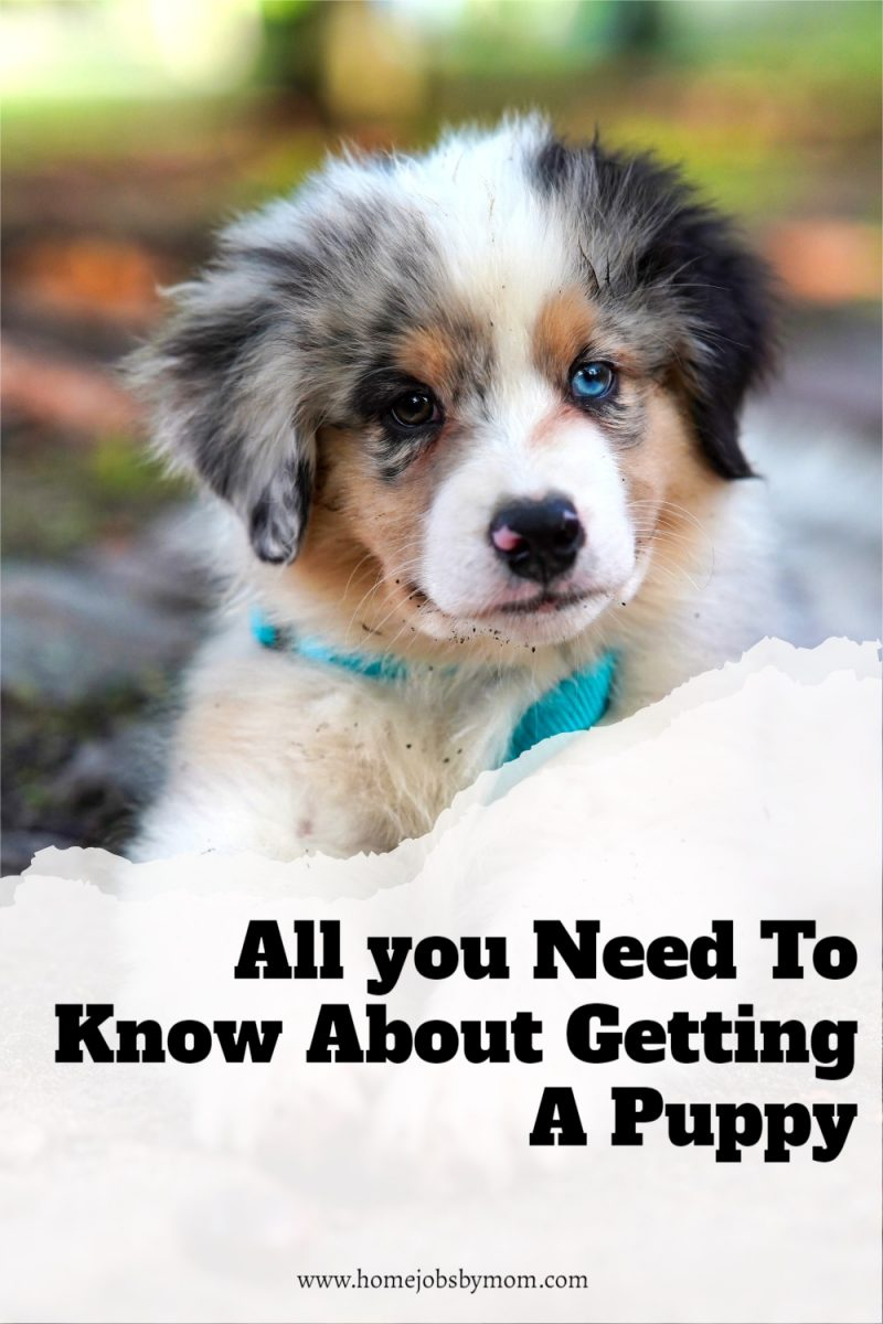 All-you-Need-To-Know-About-Getting-A-Puppy