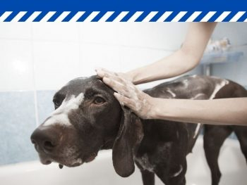 Steps To Start A Pet Grooming Business