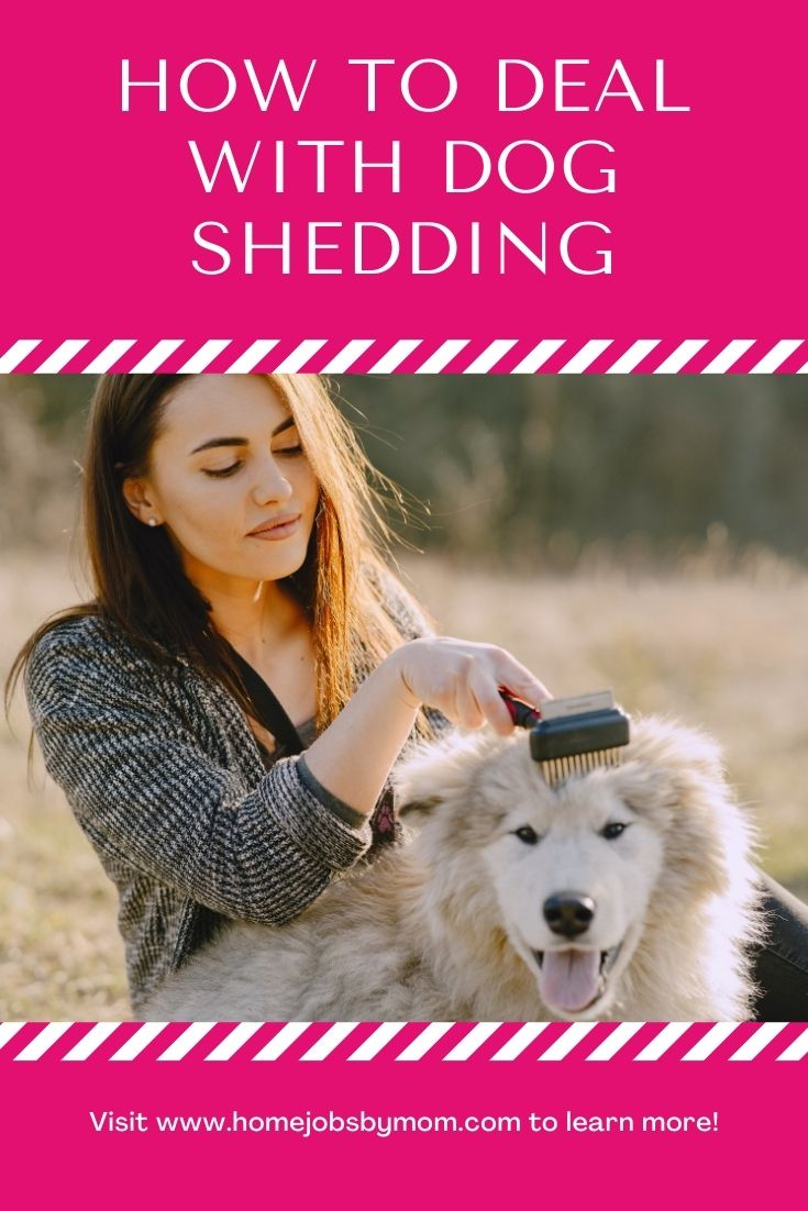 How To Deal With Dog Shedding