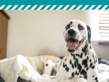 How to Create a Dog Room