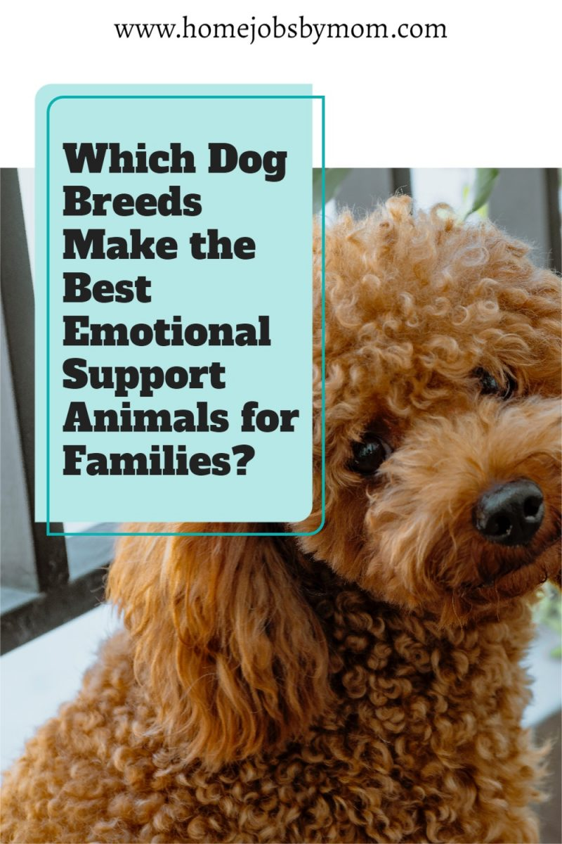 Which-Dog-Breeds-Make-the-Best-Emotional-Support-Animals-for-Families_