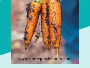 carrots vegetables garden